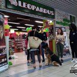 urodziny sklepu leopardus