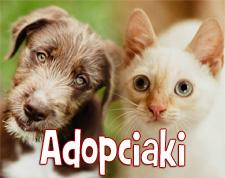 adopciaki