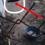 psi-odpad01